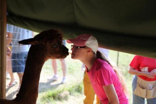 Alpaca Love!