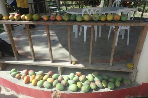 All the Mangoes!!
